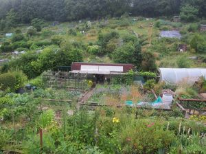 Our organic allotment