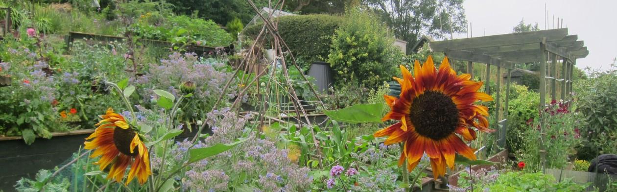 Brighton and Hove Organic Gardening Group