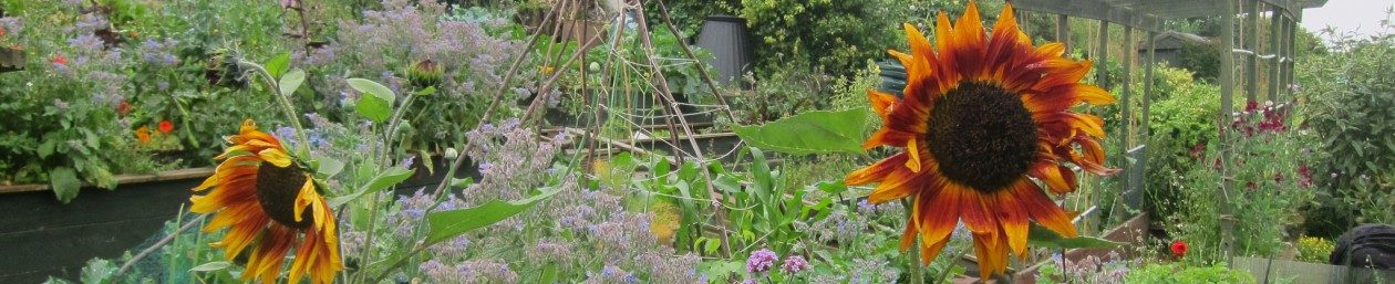Brighton and Hove Organic Gardening Group