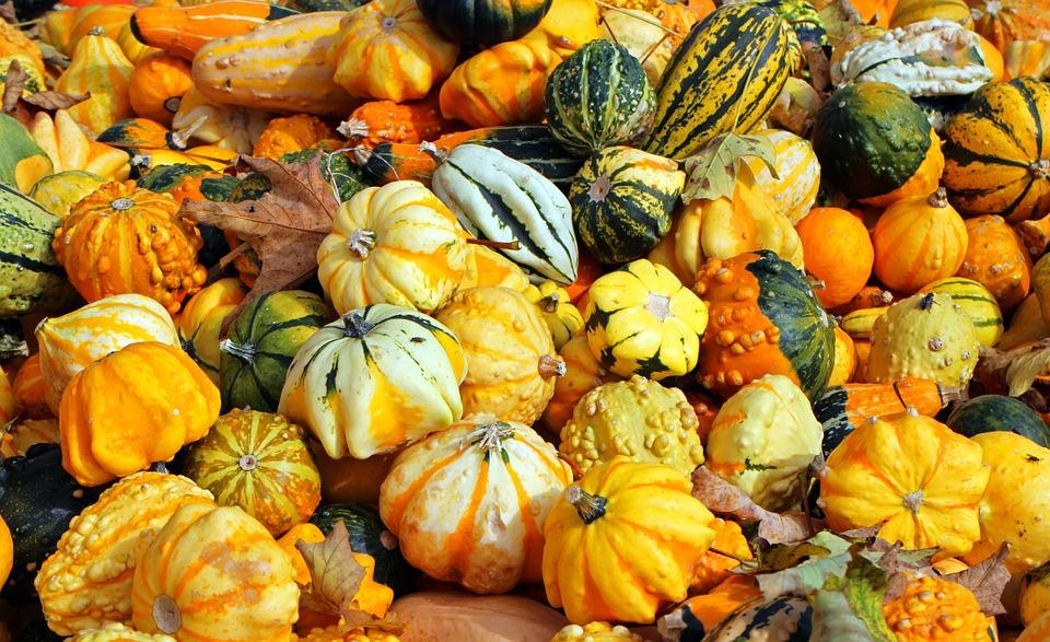 Orange Autumn Vegetables October Harvest Pumpkins