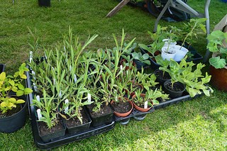 Our annual seedling swap Sunday 6th May