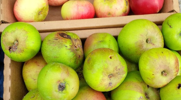 Save TOAST in your diary: The Organic Apple Sharing Treat