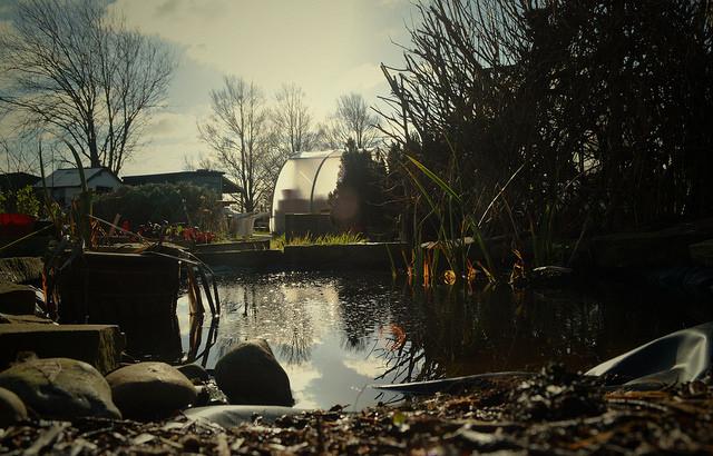 10 Mature Pond