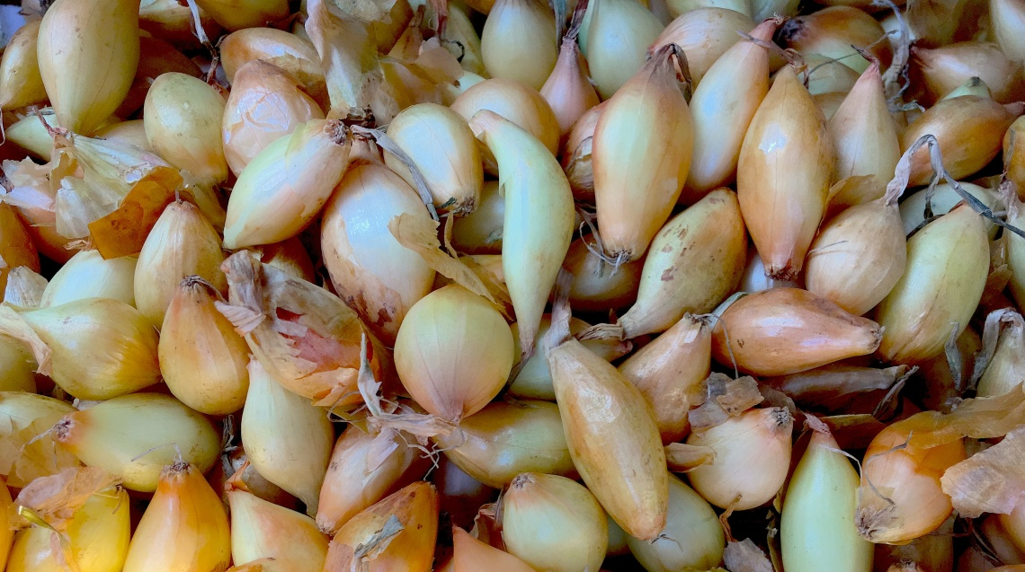 Onion Bulbs.jpg