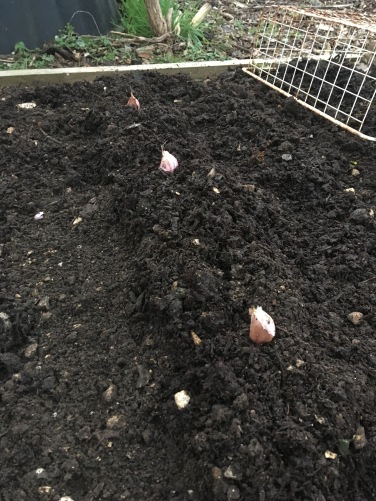 Place cloves along mound evenly spaced