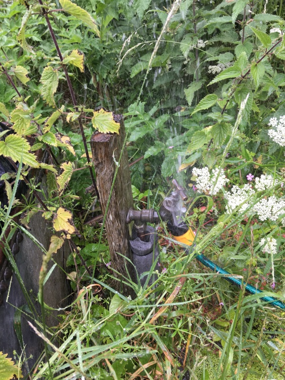 report leaky taps on allotments