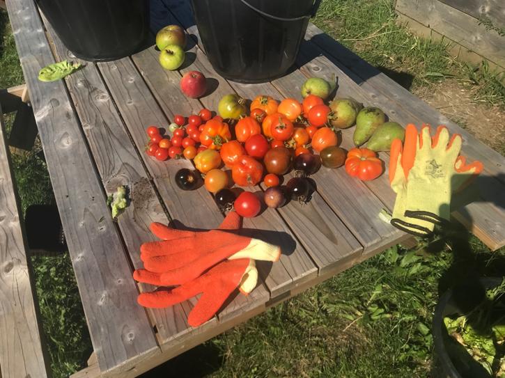 5 Harvest