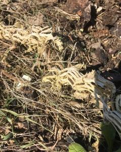 Squash stem skeleton