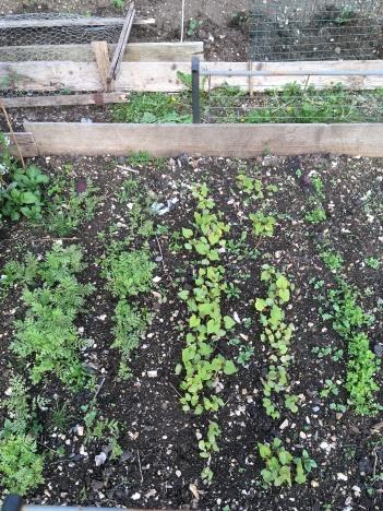 Green Manures May