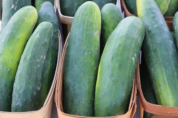 cucumber-green-vegetable-food-healthy-organic-diet-fresh-vegetarian